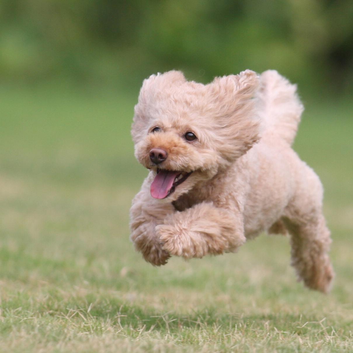ドッグサロン いぬくら トリミング 犬と暮らす
